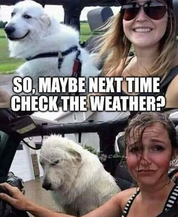 Check the weather memes