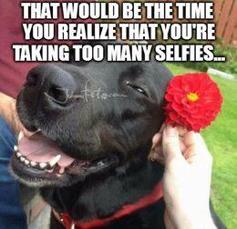 Too many selfies memes